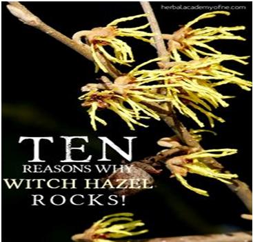 Witch Hazel Lip Piercing Care