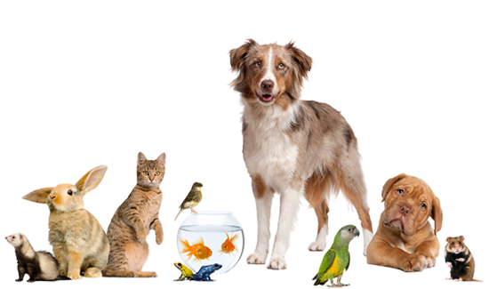 Types of pets with specialities
