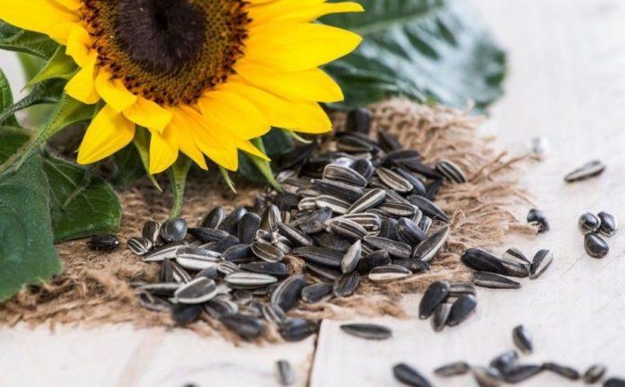 benefits of sunflower seeds