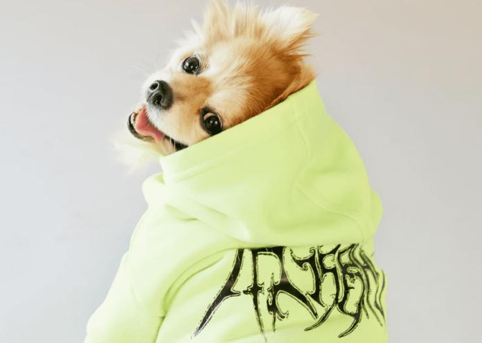 Designer Dog Clothes