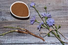 Chicory root benefits