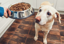 different types of dog foods