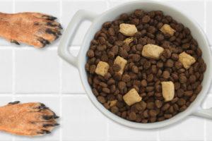 freezed dried food