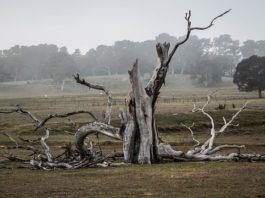 Dead Tree Removal Near Me