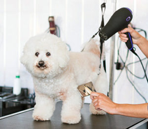 brushing your dog grooming