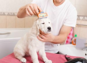 Reasons for Dog grooming