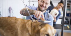 pet dog grooming