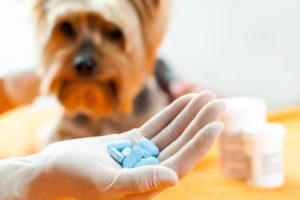 Best Dog Supplement
