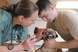 Checklist for hiring a veterinarian
