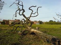 Dead Tree Removal Services