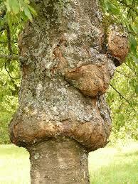 dead tree diseases