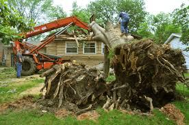 Professional Tree removal Company