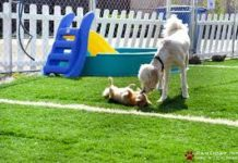How to chose Dog Boarding Kennel