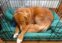 what is crate training a dog