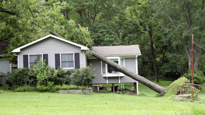 what to do if a tree falls on your house