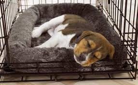 Benefits of Crate Training
