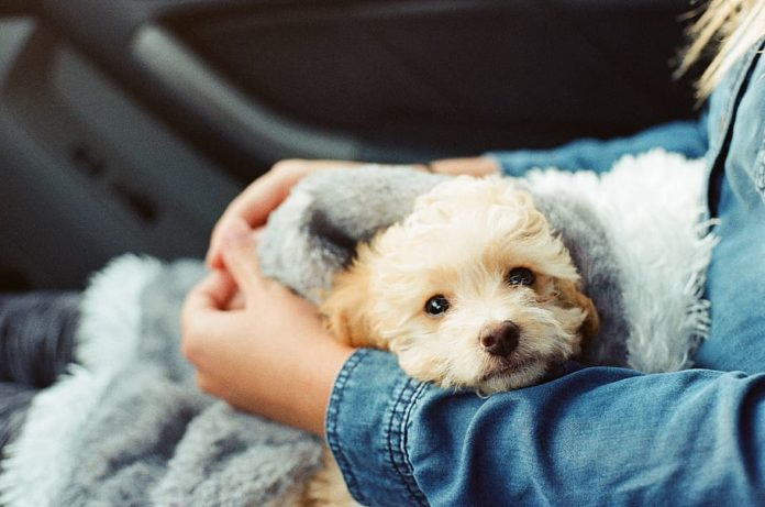 What is Emotional Support Animal letter
