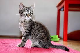 type of cat sitter