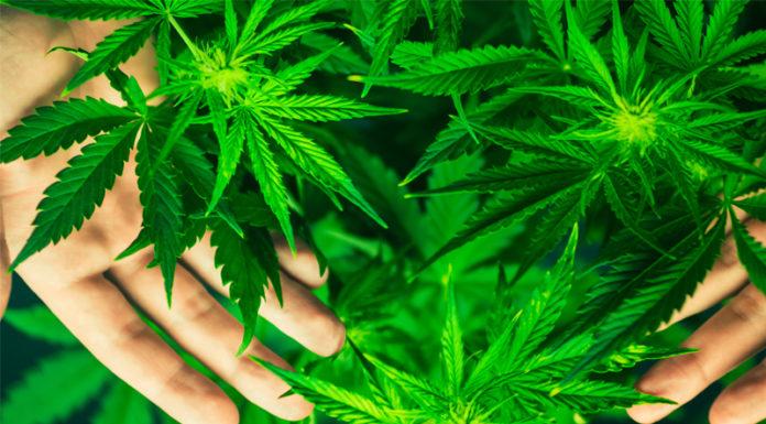 get weed online
